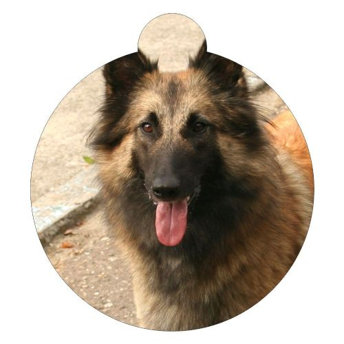 Belgian Tervuren Sheepdog Picture ID tag